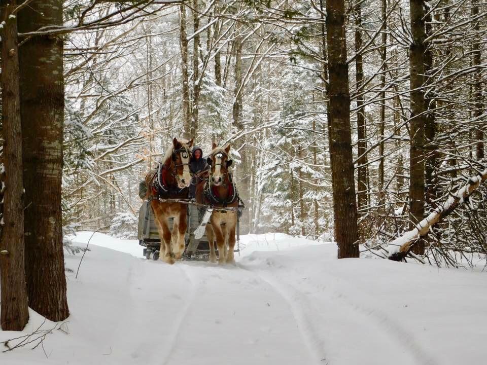Horses Sleigh Snowy Winter Woods